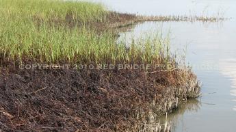 Barataria Bay, July 31st